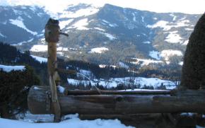 Skifahren-Westendorf